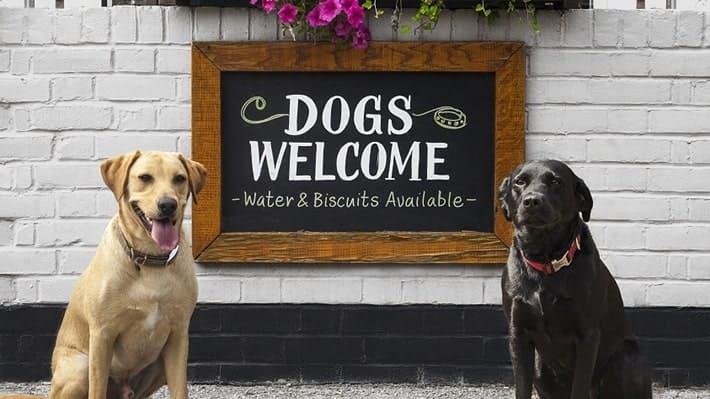 """El alojamiento vacacional """"pet friendly"""" está de moda"""